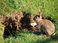 rabbit control dundee