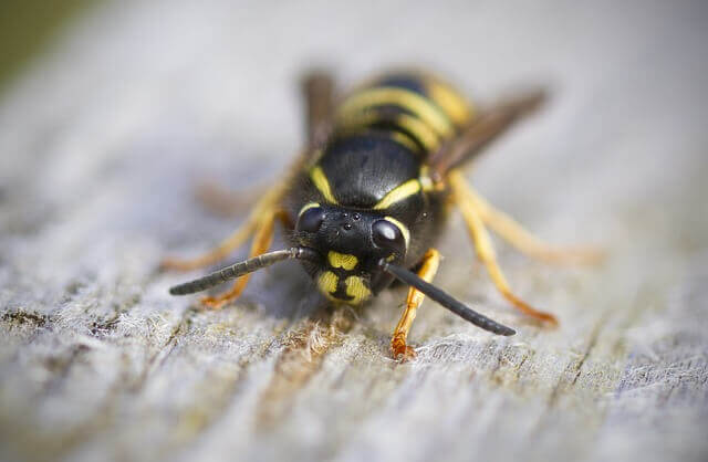 wasp nest removal dundee